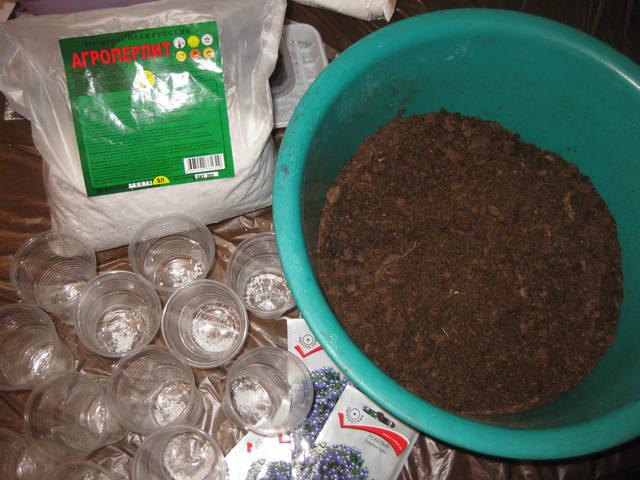 Грунт семенам лобелии нужен очень легкий и рассыпчатый