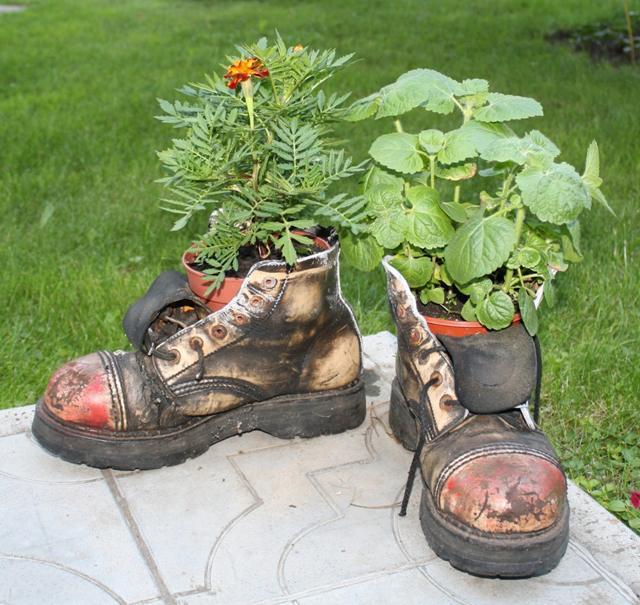 Цветы для альпийской горки: фото и названия растений 93