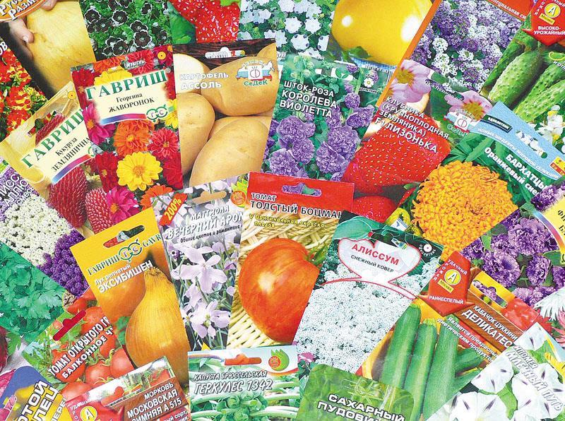 Как правильно покупать семена на рассаду