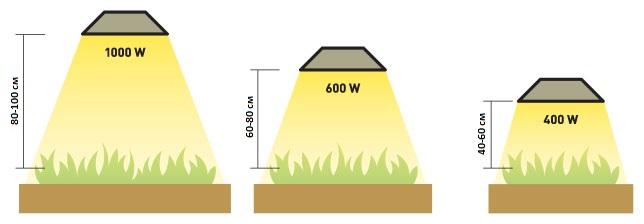 Как правильно размещать освещение для растений
