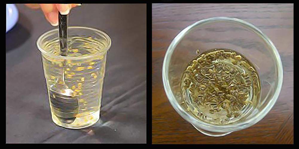 Калибровка семян в растворе поваренной соли