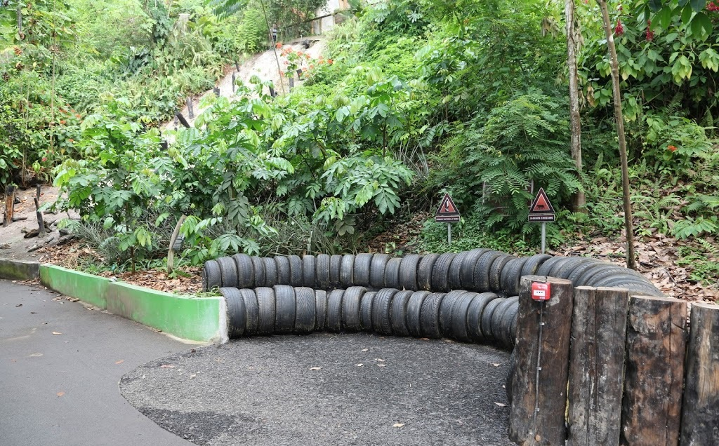 Каучуконосные деревья и шины