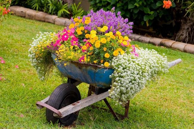 Красивая клумба с однолетними цветами