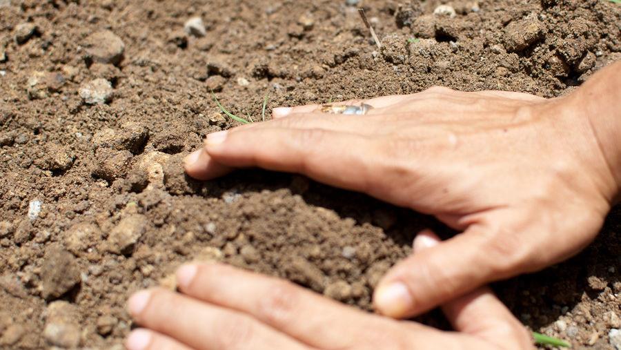 Лунка с картофелем присыпается землей