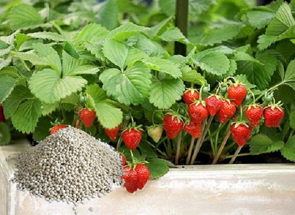 Минеральные гранулированные удобрения для земляники
