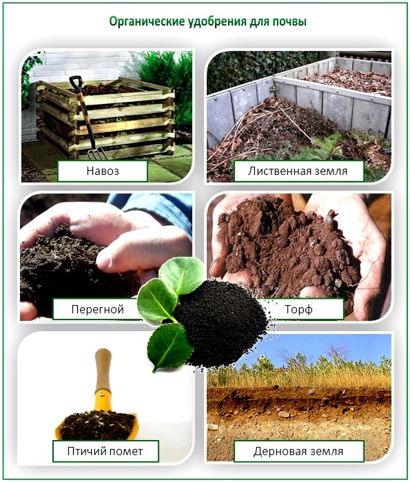 Органические удобрения для почвы