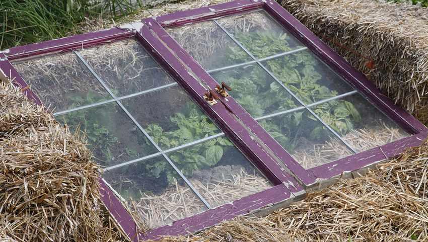 Парник из соломы и стеклянной рамы