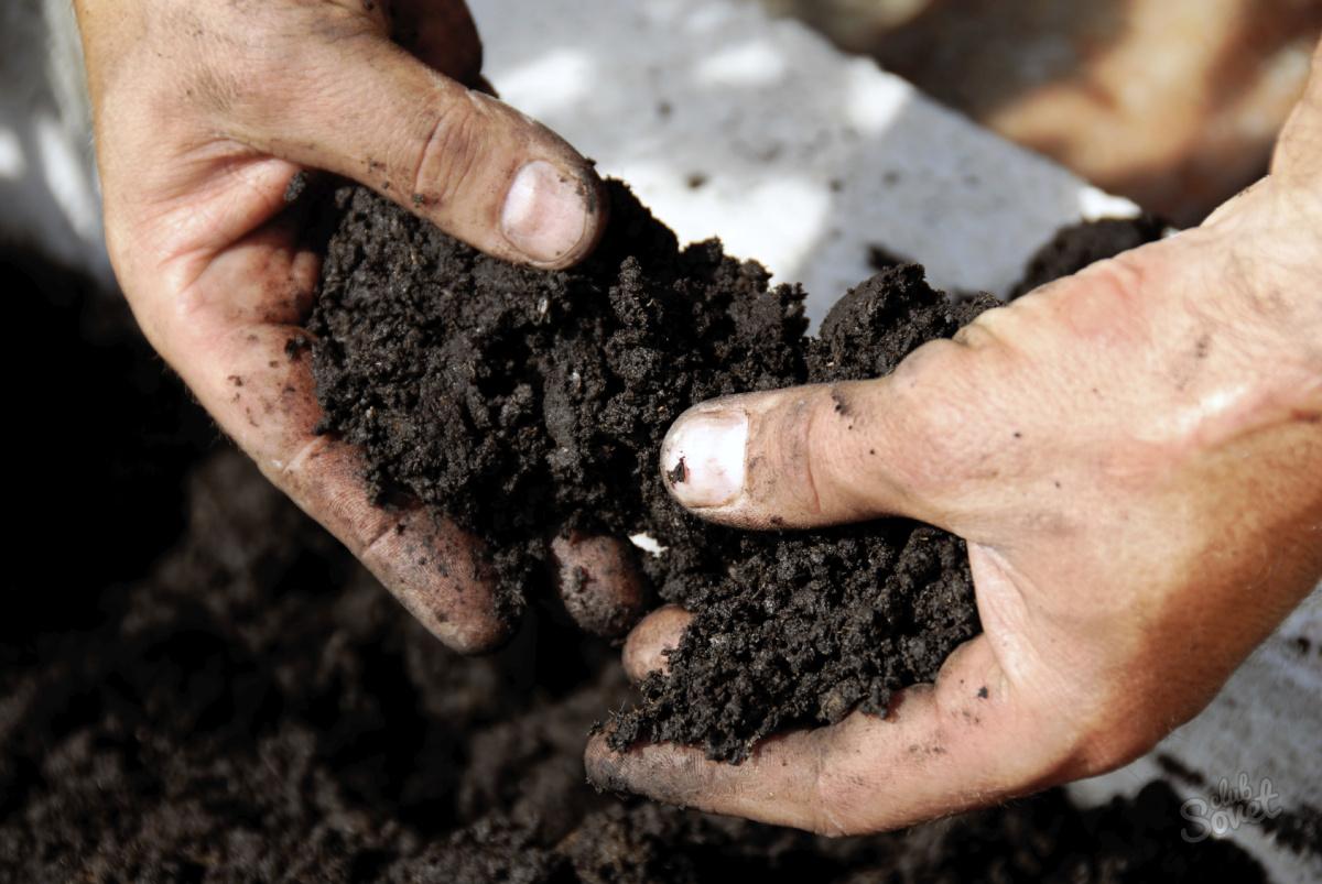 Почва для рассады земляники