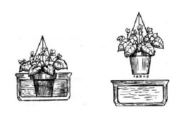 Погружение горшка с растением в емкость с водой