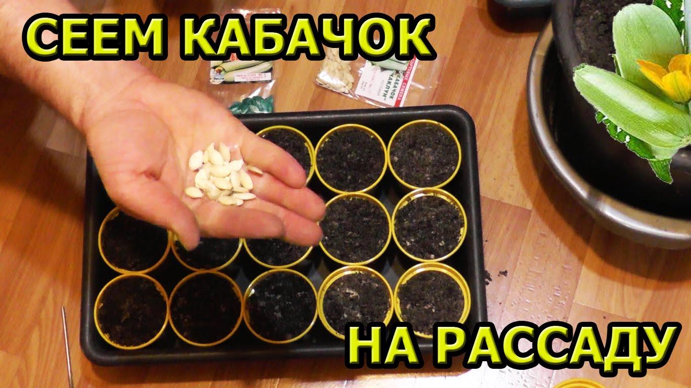 Посев кабачков на рассаду