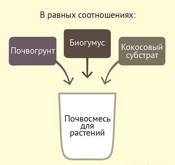 Примерная схема приготовления почвосмеси для рассады