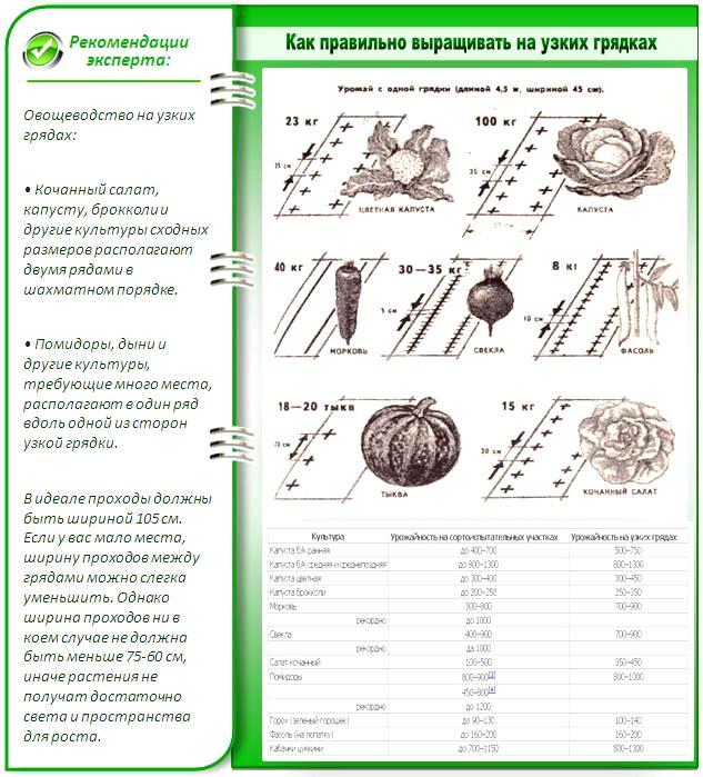 Примерные показатели урожайности грядок Митлайдера для некоторых культур