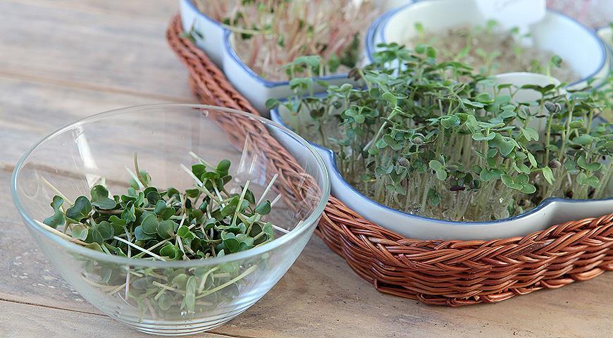 Проращивание зелени в гидрогеле