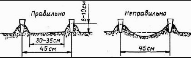 Пространство между бортиками не должно иметь перепадов высоты, иначе в них при частом поливе, свойственном методу Митлайдера, начнет застаиваться вода