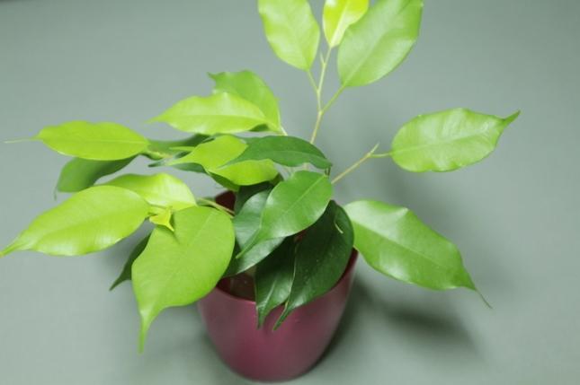 Растение, выращенное в гидрогеле