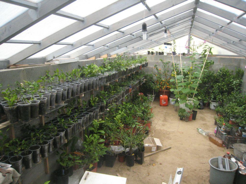 Растения в теплице зимой