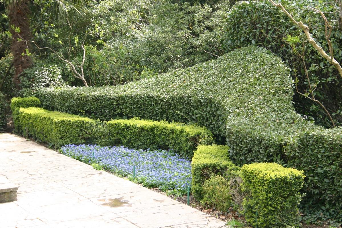 Разноуровневая 2-рядная живая изгородь