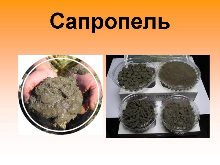 Сапропель