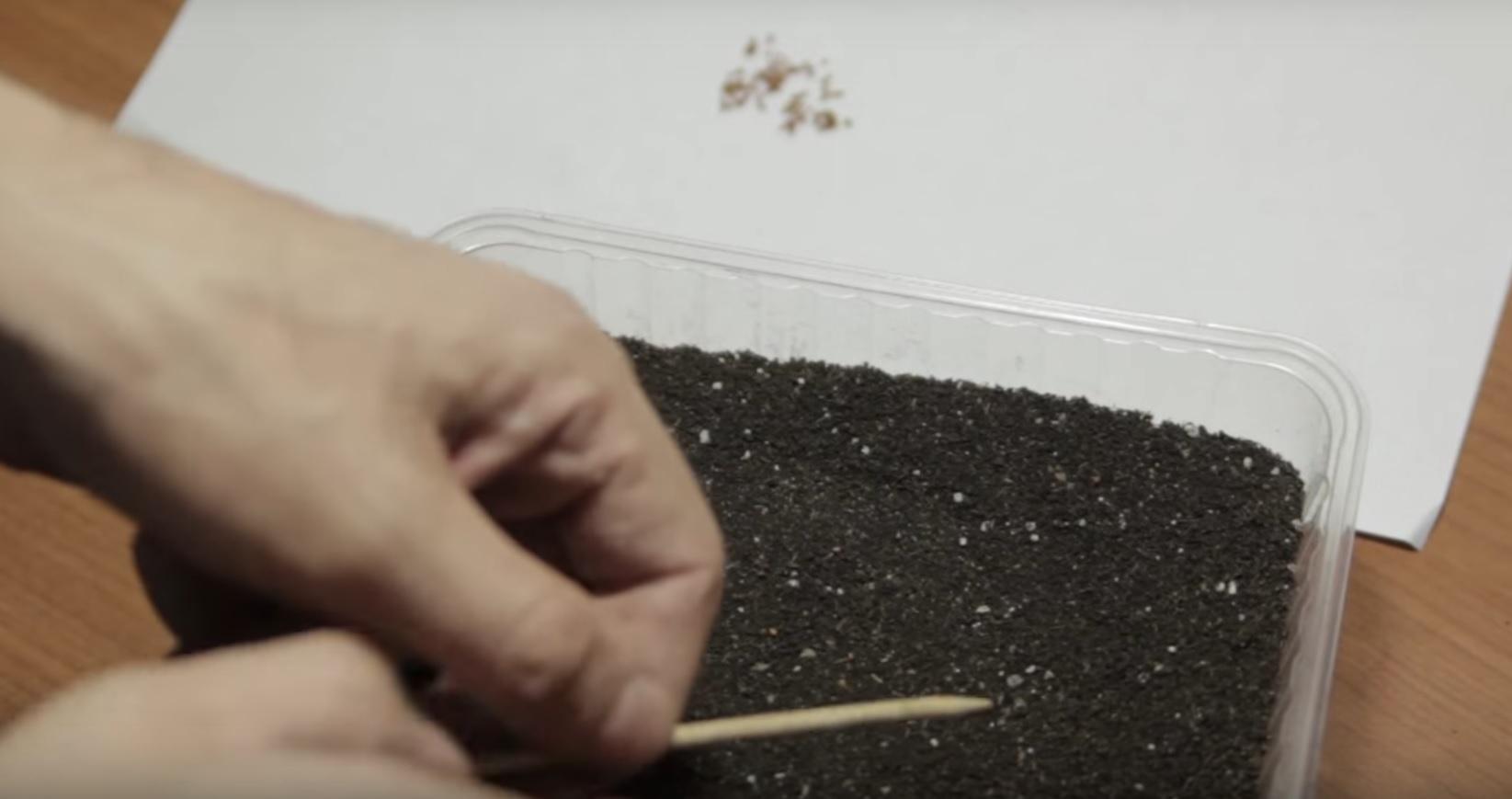 Семена нужно распределить максимально равномерно