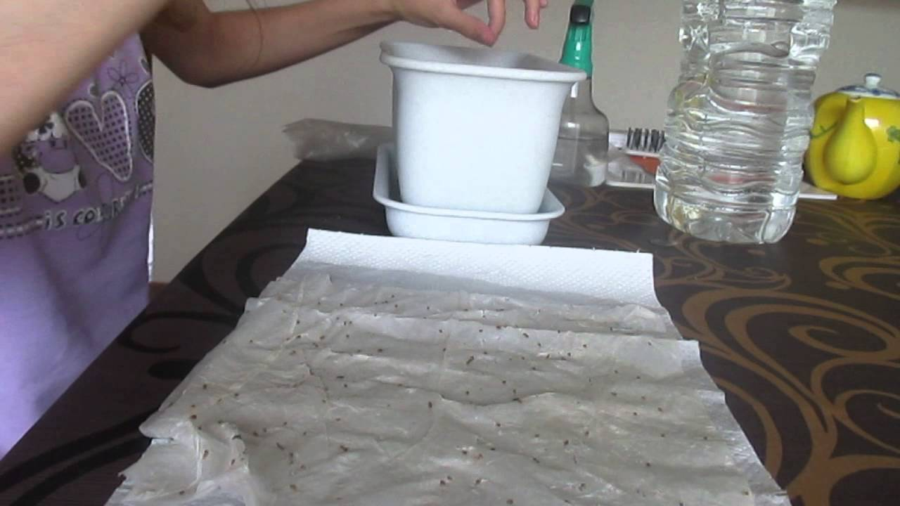 Семена раскладываются на куске натуральной ткани