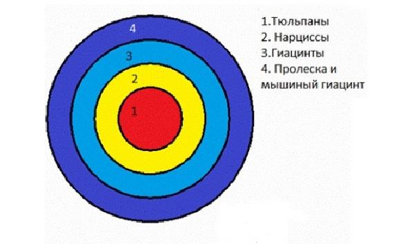 Схема круглой клумбы из тюльпанов, нарциссов, гиацинтов, пролеска и мышиного гиацинта