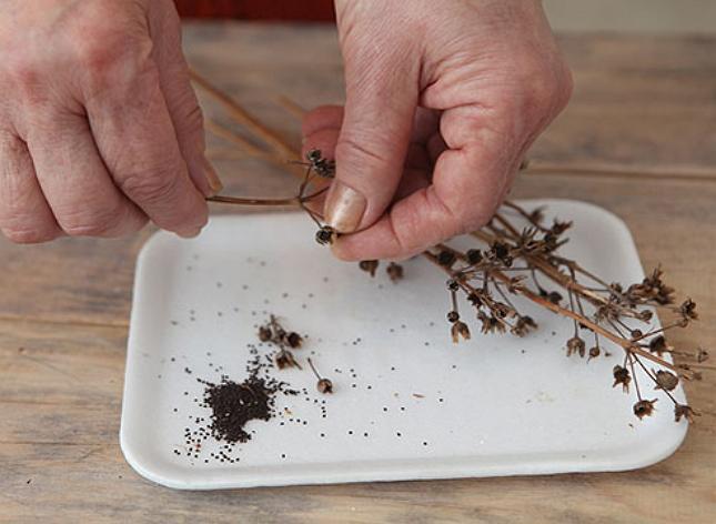 Сортировка семян и удаление мусоа