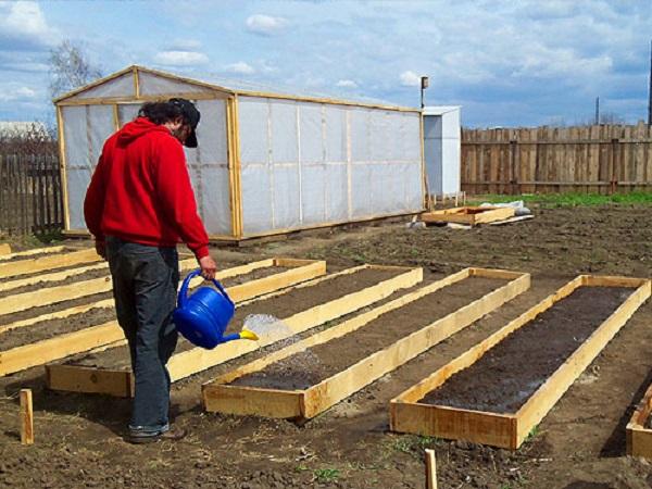 Суть грядки по методу Митлайдера — выращивание густо высаженных овощей на узких открытых грядах