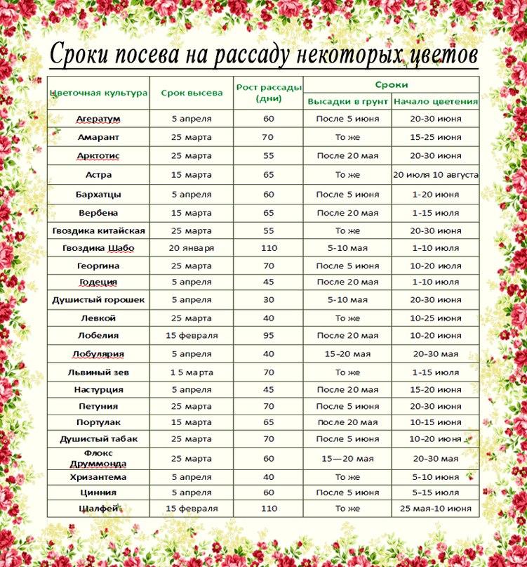 Таблица посева цветов на рассаду