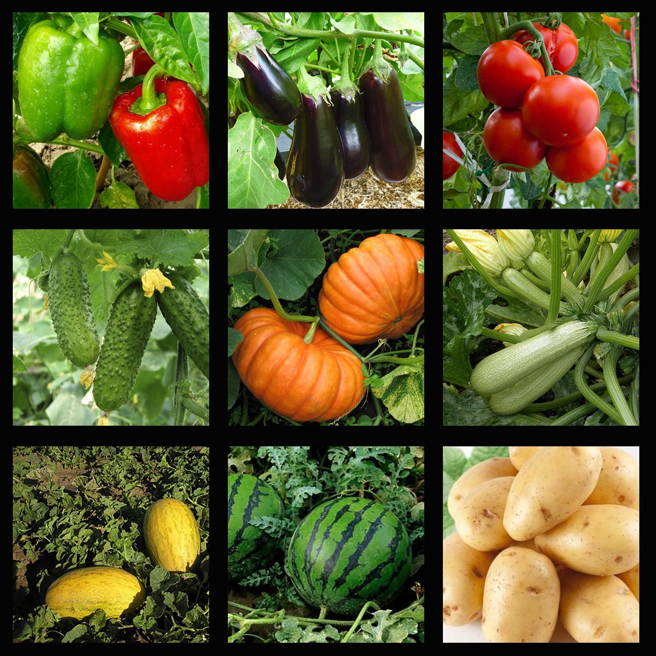 Теплолюбивые культуры, выращиваемые рассадой