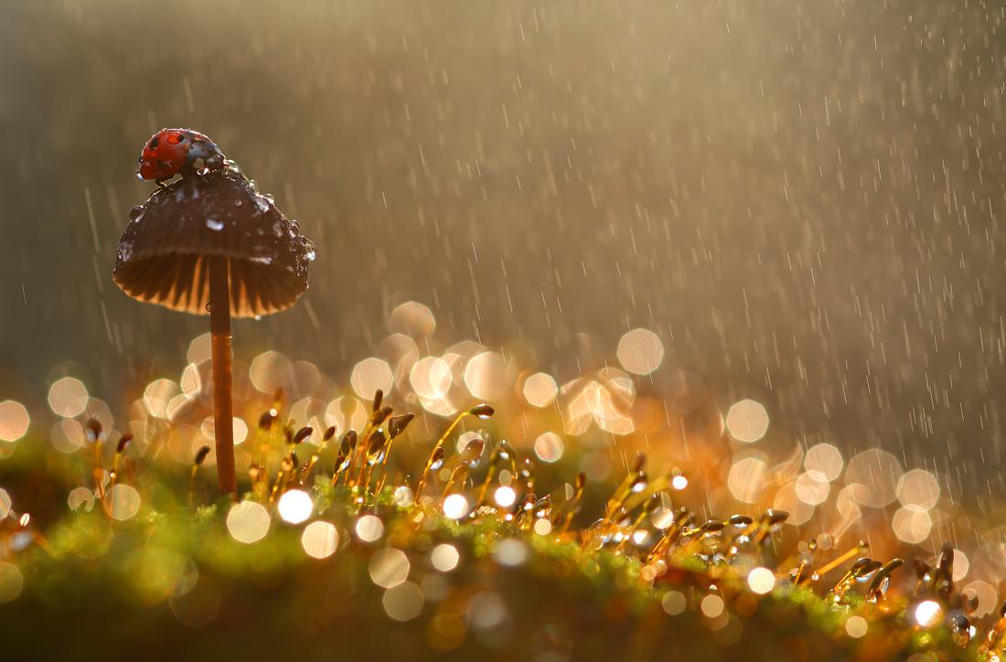Теплый лентий дождь - это тоже один из способов полива орхидей