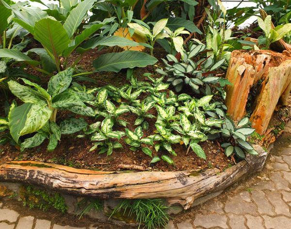 Уникальные ограждения из коряг и корней