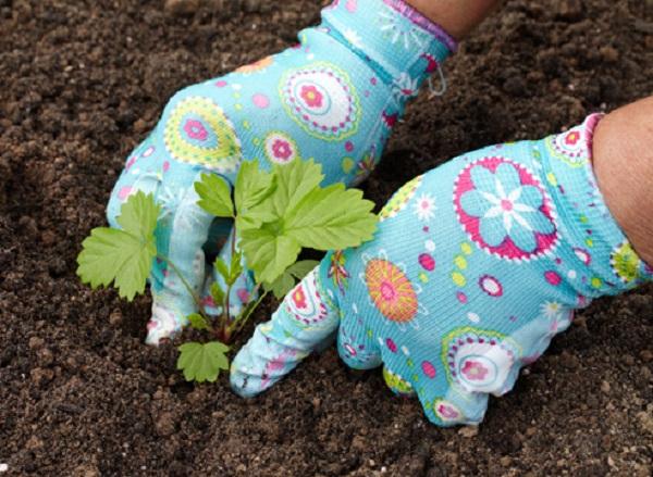 Уплотнение грунта вокруг растения