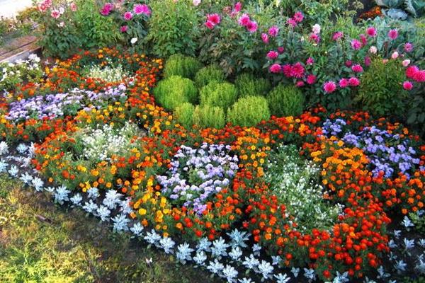 В центре клумб высаживают амарант, табак душистый или другие растения, цветущие все лето