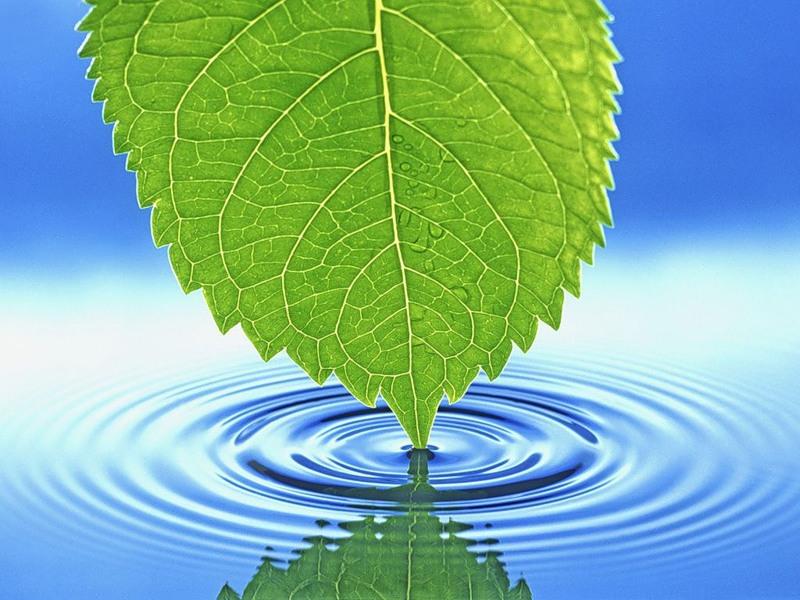Вода жизненно необходима всем растениям