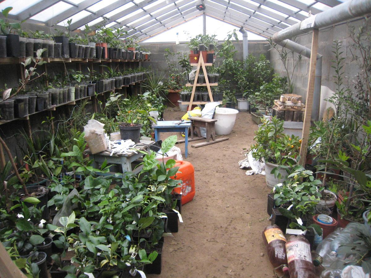 Выращивание контейнерых растений и рассады в траншейной теплице