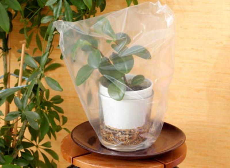 Поставьте растение в миску с водой. Наденьте мешок на растение и плотно обмотайте край пакета ниткой, исключив прохождение воздуха