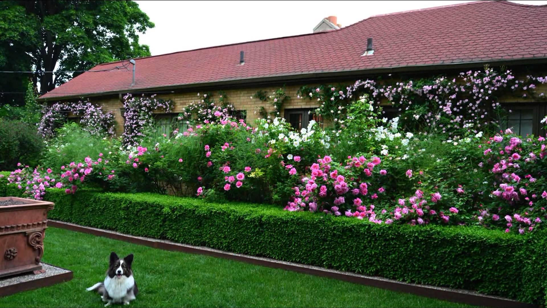 Красивая живая изгородь