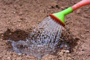 Шаг 1. Полив почвы перед посевом