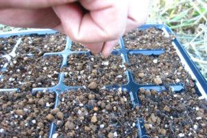 Шаг 2. Посев семян