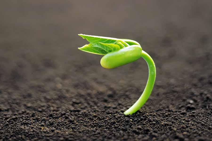 У каждого растения свои требования к почвосмеси