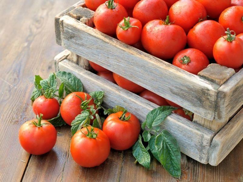 Рассада помидор в домашних условиях: как вырастить рассаду томатов на подоконнике