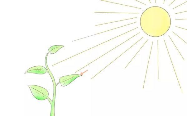 Опирайтесь на потребности растений в тех или иных веществах с учетом времени года