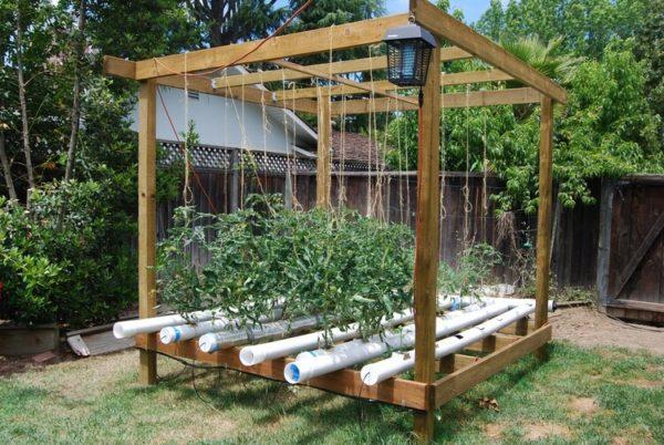 Выращивание помидор в гидропонике на основе пластиковых труб