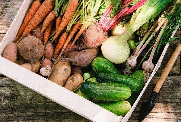 Прежде чем изучать правила хранения, уясните правила сбора овощей