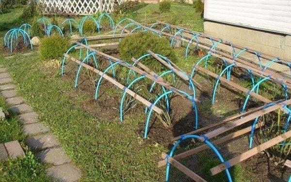 Дуги из пластиковых труб, вбитые концами в землю