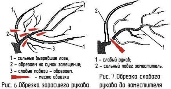 Как правильно обрезать виноградные рукава