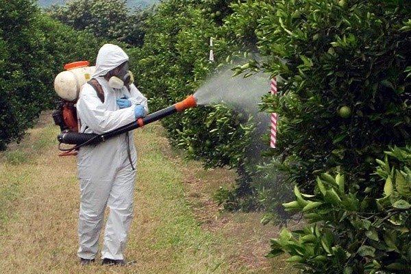 Лучше всего проводить опрыскивание любых растений в защитном костюме, однако, если такого у вас нет, запаситесь хотя бы рубахой с воротником и рукавами, длинными штанами, перчатками, очками и маской