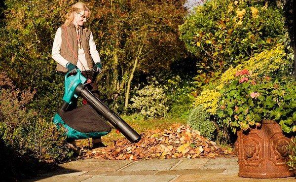 Обязательно очищайте розарий от мусора