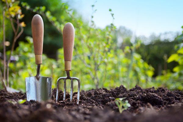 Растения заражают мицелием весной