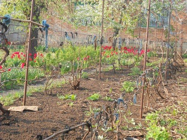 Растение приобретает силу для борьбы с наступающими морозами после обработки